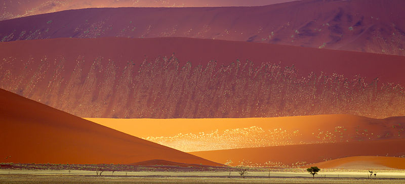 Sand Dunes Damib Naukluft 2011
