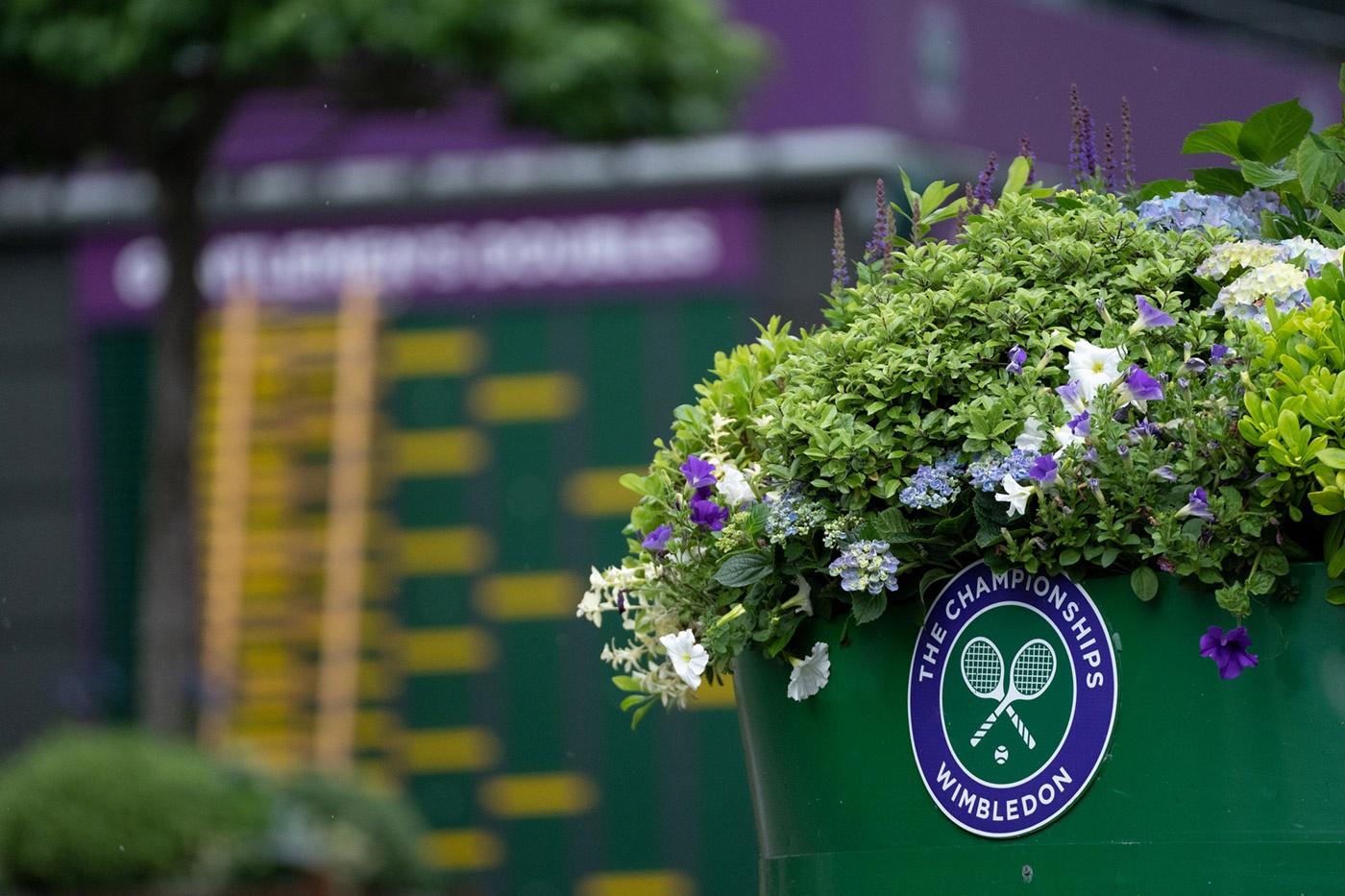Wimbledon Players to Follow